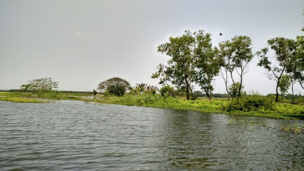 pondicherry tourism hotel Ousteri Wetland and National Park