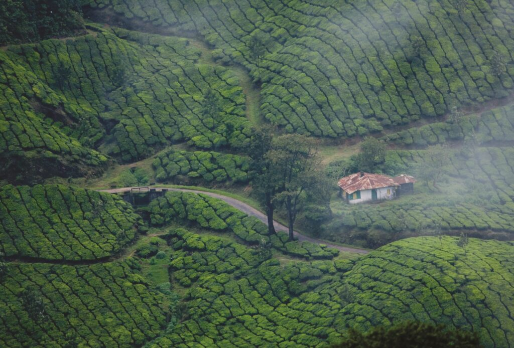 Kerala tourism india hotels munnar