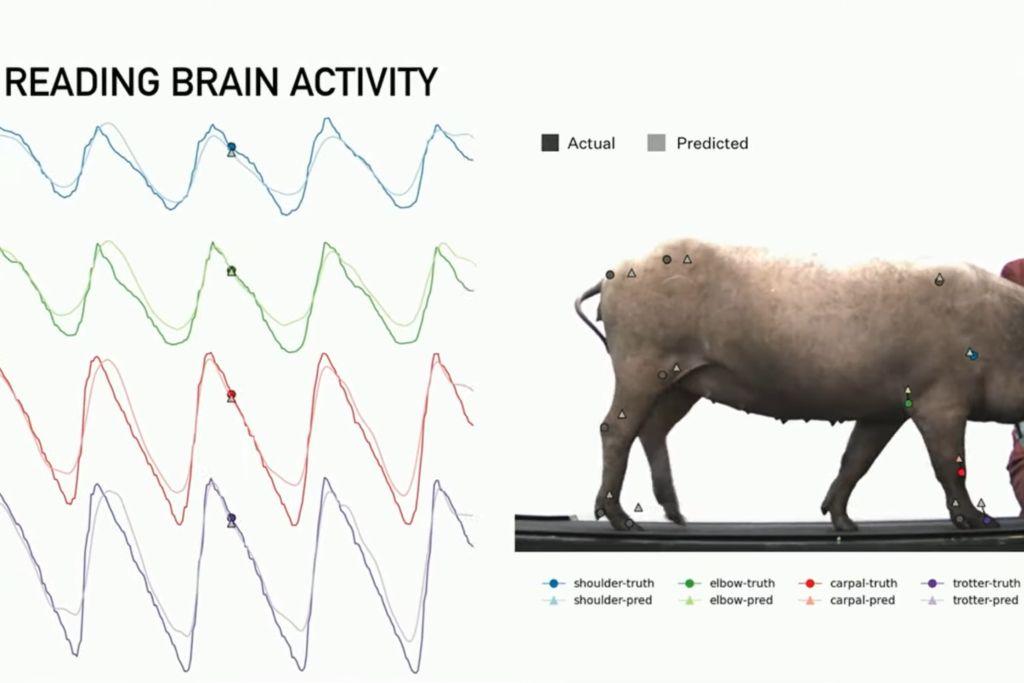 neuralink jobs elon musk neuralink stocks pig