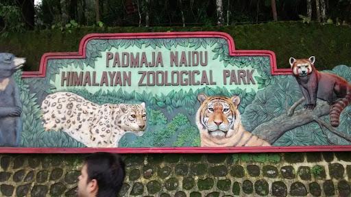 darjeeling Padmaja Naidu Himalayan Zoological Park